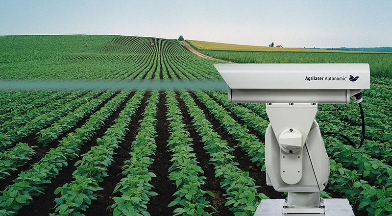 робототизированноеи лазерное пугало Agrilaser Autonomic на поле