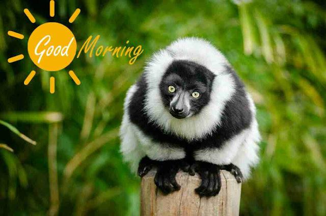 funny good morning image of panda