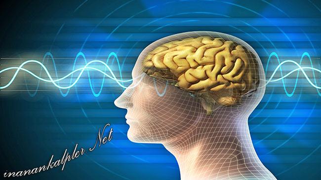 Beyin Ve Hafızayı Güçlendiren 8 Şifalı Bitki - www.inanankalpler.net