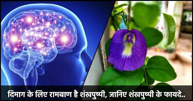 सिर्फ दिमाग को तेज करने लिए ही नहीं बल्कि अनेक रोगो के लिए किसी रामबाण से कम नहीं है शंखपुष्पी, जानिए शंखपुष्पी के फायदे