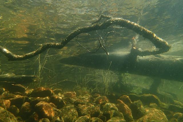 veden alla kivikkoa ja veteen kaatunut puunrunko