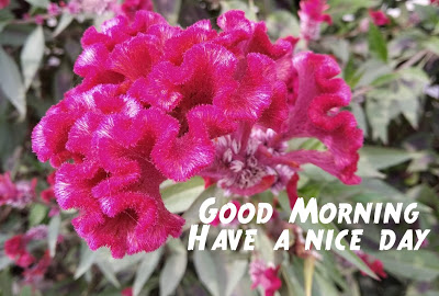 Latest Best Good Morning Wishes