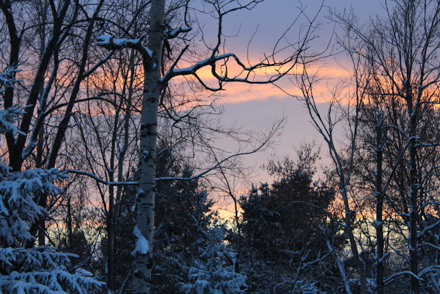 Winter Trees and sunset