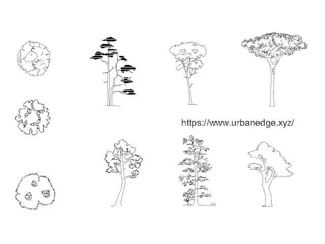 Pine tree dwg cad blocks download - 5+ tree plan & elevation dwg models