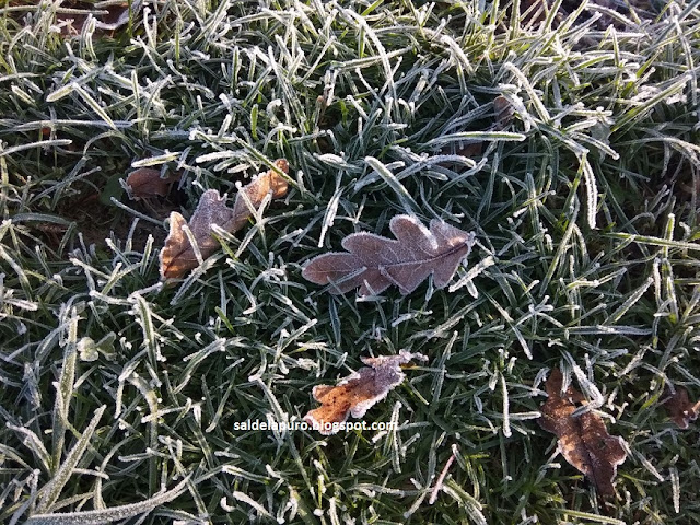 hojas-secas