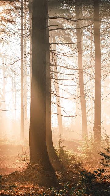 Morning Sunrise Forest Wallpaper