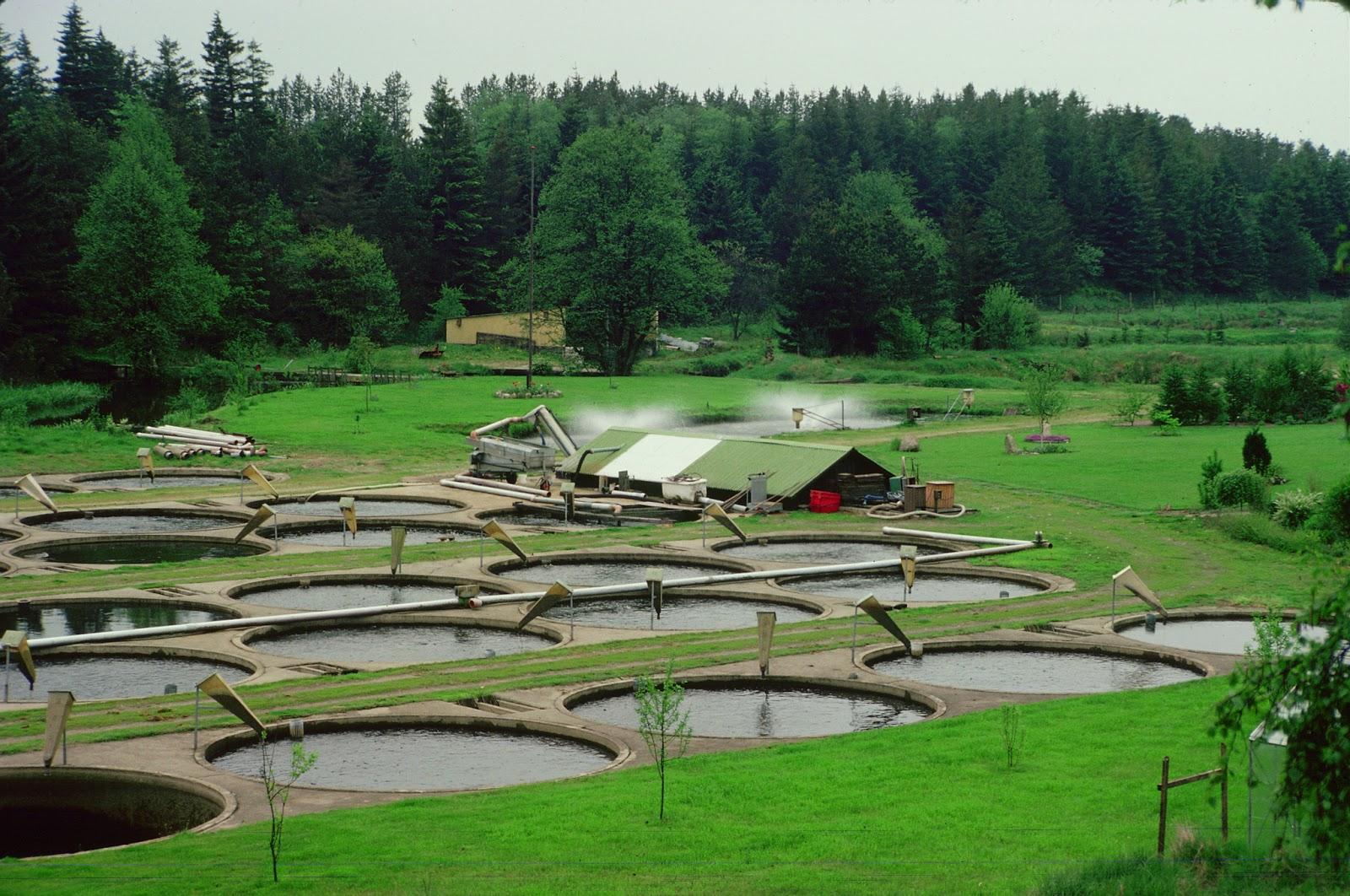 Asesor a trucha y tilapia razones para invertir for Como criar truchas en estanques