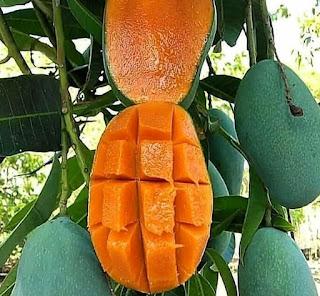 Banyak Manfaat buah mangga