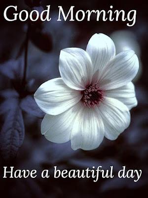 good morning images flower