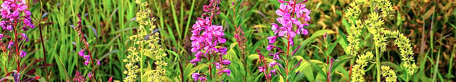 Цветы для преподобного Арсения Новгородского.