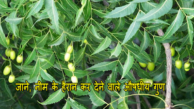 neem ke fayde for skin in hindi