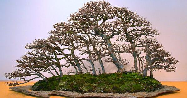 Bonsai Landscape