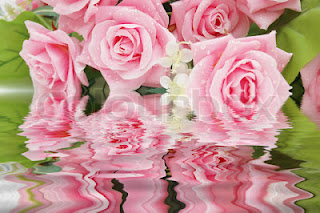 Apa de trandafiri –  elixir al frumusetii