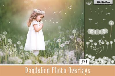 Backgrounds – Creative Market – Dandelion Overlays – 5219806 [PNG, JPG]