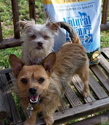 Jada and Bailey next to their Natural Balance L.I.D. dog food
