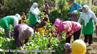 memanen tanaman sayur sawi