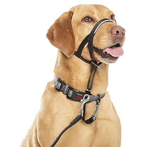 Head Collars for Dogs – How to Train with Them