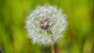 Pollinose : les gestes simples et les traitements efficaces