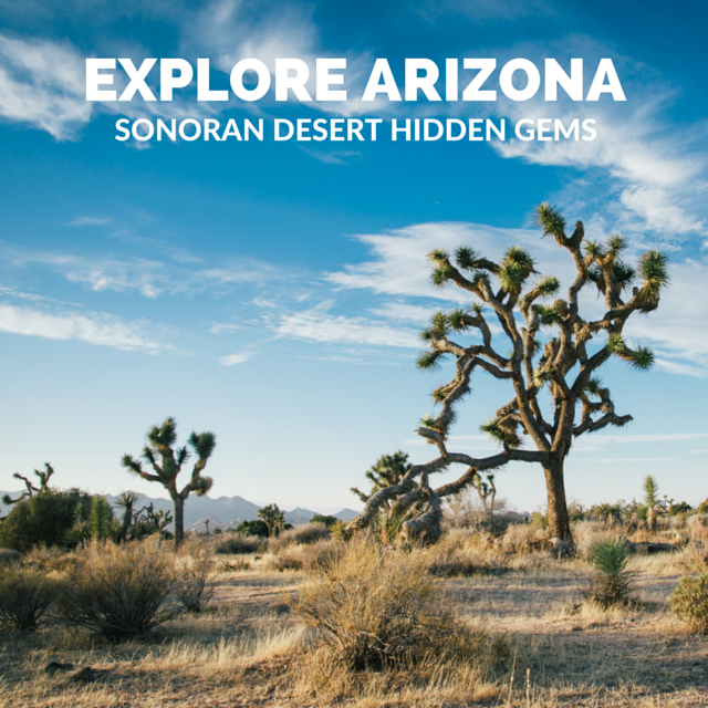 Hidden Gems of the Sonoran Desert