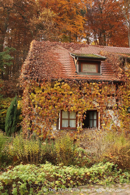 A cottage overgrown with red and golden autumn leaves. Autumn foliage.