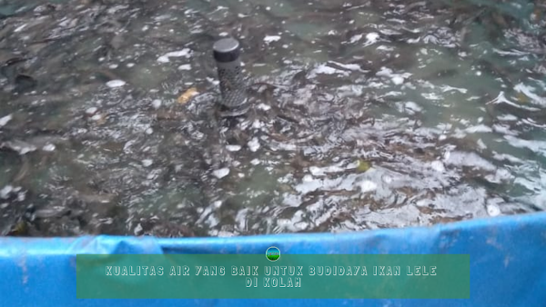 Kualitas Air yang Baik Untuk Budidaya Ikan Lele di Kolam