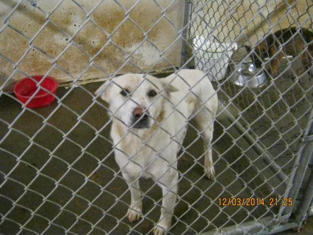 12/4/14 Will at Mason Cty Animal Shelter WV Needs Adopter