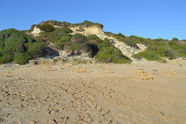 spiagge del mediterraneo dove nidifica la caretta caretta