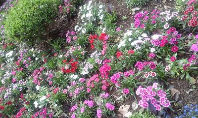 A foto mostra o lindo jardim de flores, as mães amam flores elas trazem alegria. É uma lembrança de afeto, além dos beijos e abraços.