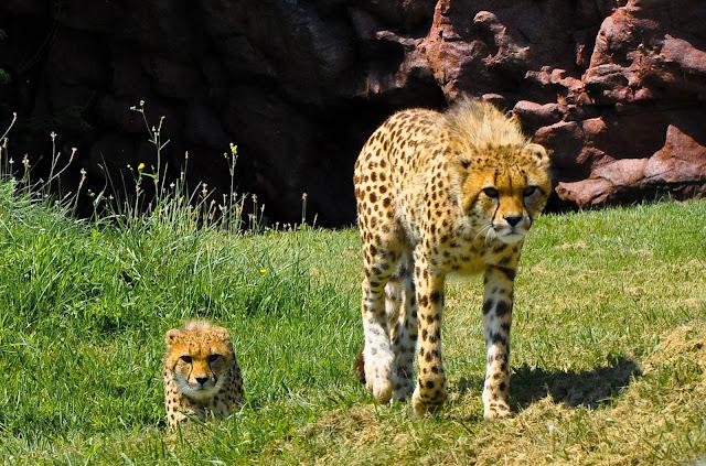Toronto Zoo, Toronto - Canada