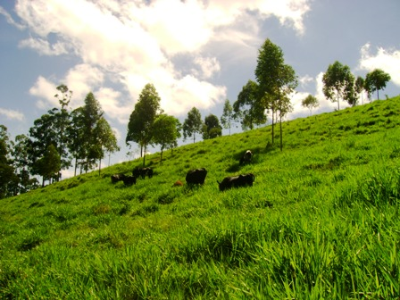 O Solo, Desertificação e Preservação Ambiental
