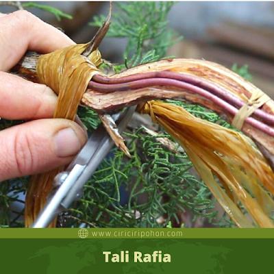 Tali Rafia