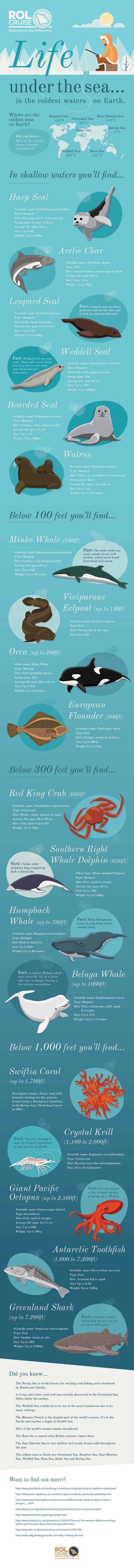 Life Under The Sea #infographic