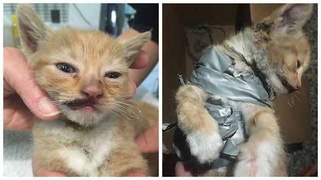 В Одессе зоозащитники благодаря неравнодушным соседям обнаружили квартиру, хозяева которой собирали котят и морили их голодом
