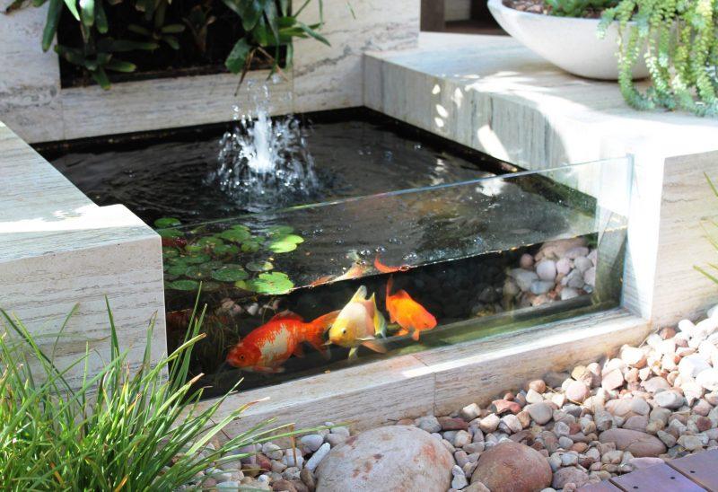 Bagaimana Cara Menghilangkan Bau Air Kolam Ikan? Simak Tips Berikut