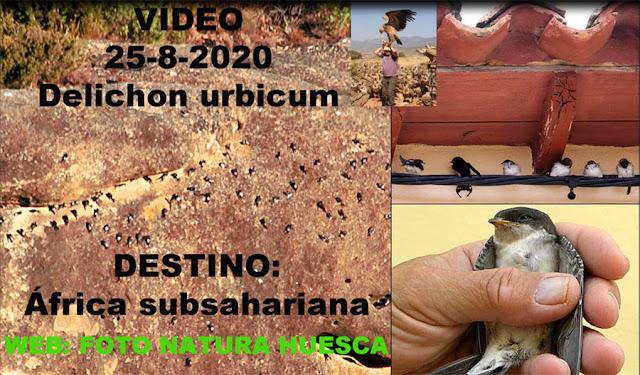 https://youtu.be/FCs4XI044Xs