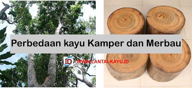 Perbedaan kayu kamper dan merbau