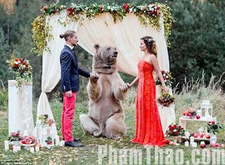 Con gấu rừng làm chứng hôn cho cặp vợ chồng ở Nga