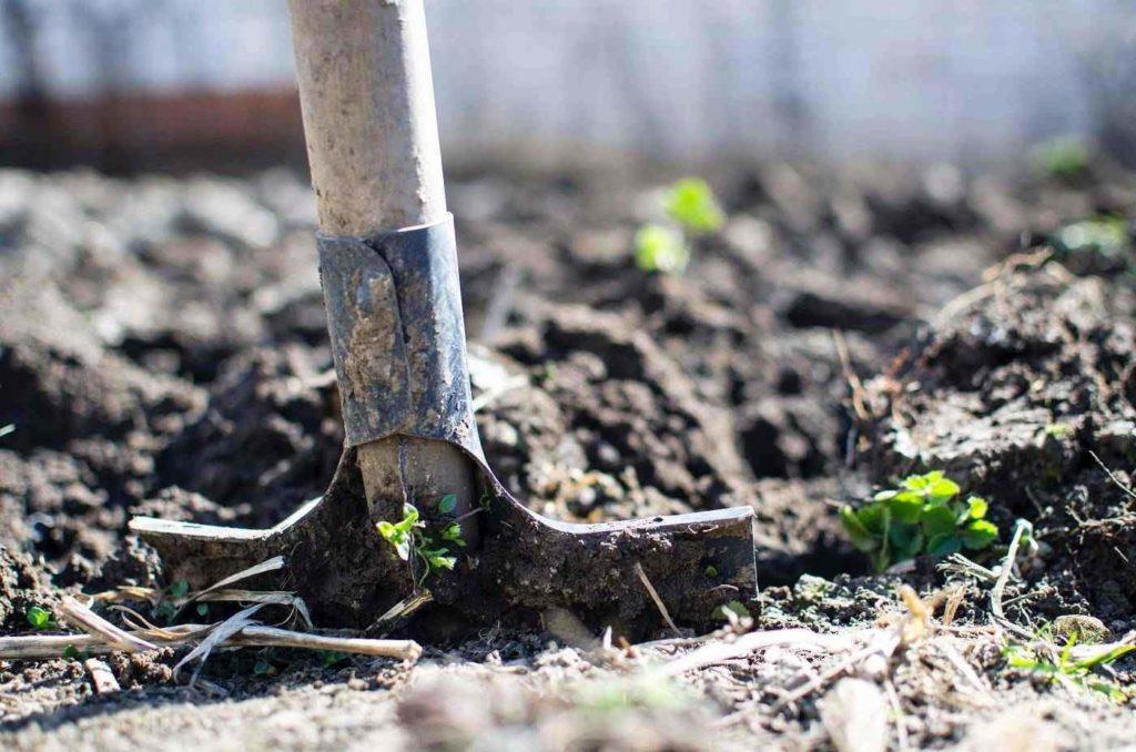 Gardens serve many purposes around human dwellings