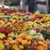 Caruaru recebe 7ª edição do Festival de Flores de Holambra