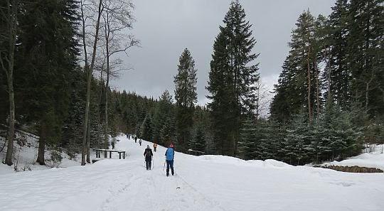Leśna droga do Jordanowa.