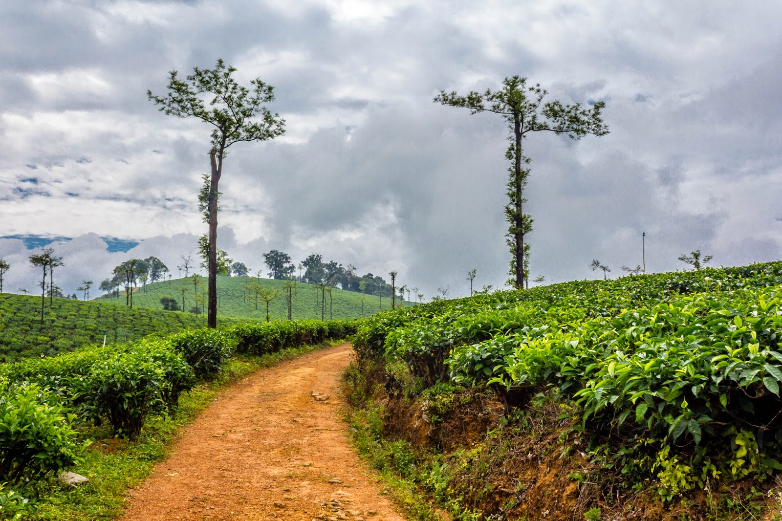 Path to Nallamudi Punjolai in between tea plantations
