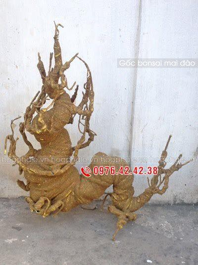 Goc bonsai mai dao tai Ha Yen