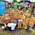 PM resgata animais silvestres durante operação em Feira de Santana