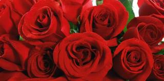 Hati-hati Memilih Bunga Buat Kekasih