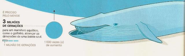 mamífero-aquático