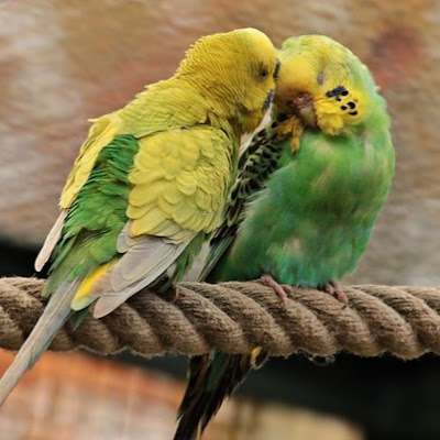 cute bird pic