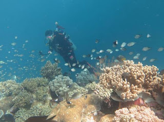 Diving at Wakatobi