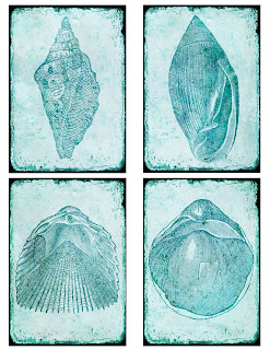 sea shell background collage atc crafting scrapbooking downloads