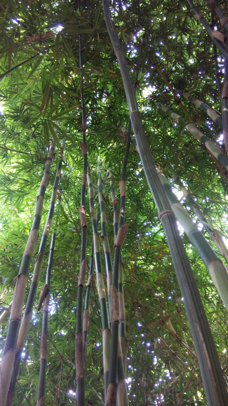 Bamboo Plants Catalog — จำหน่ายกล้าพันธุ์ไผ่
