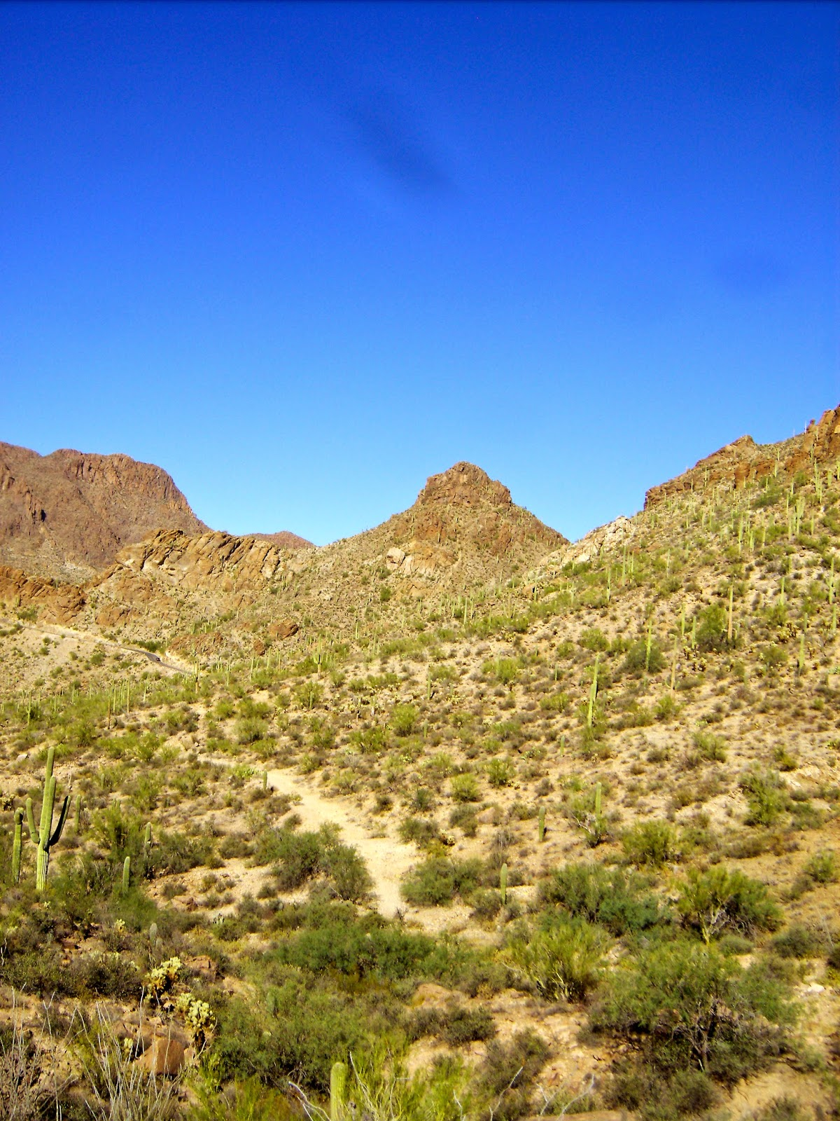 the tucson mountains in tucson mountain park